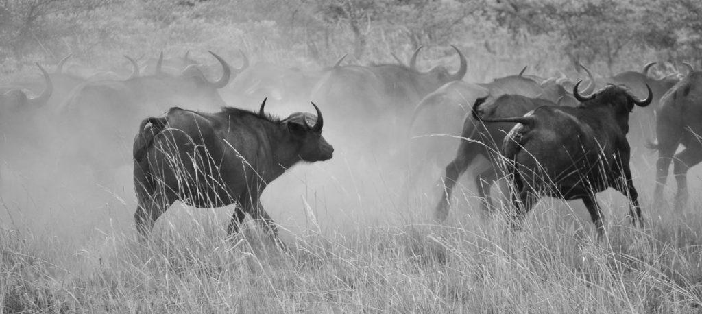 Madoqua Safaris